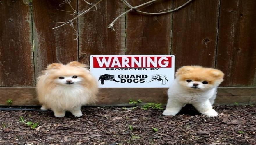 Σκύλος σκύλοι Προσοχή Σκύλος