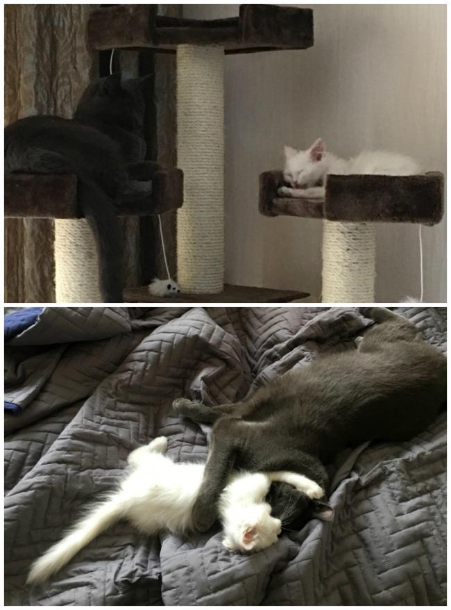 κτηνίατροι γατάκι