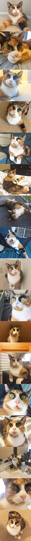 φρύδια Γάτα