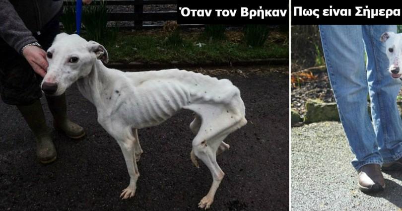 Σκύλος κακοποίηση σκύλων διάσωση σκύλου