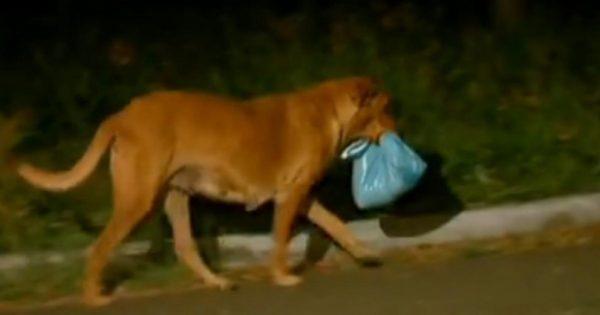 Αρχικά νόμιζε ότι ο σκύλος της κουβαλούσε μια σακούλα με σκουπίδια. Όταν είδε το περιεχόμενό της, λύγισε…