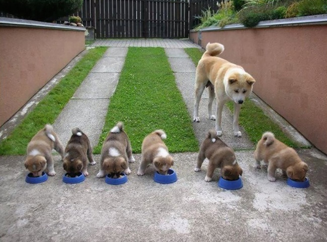 σκυλίτσες κουτάβια κουταβάκια