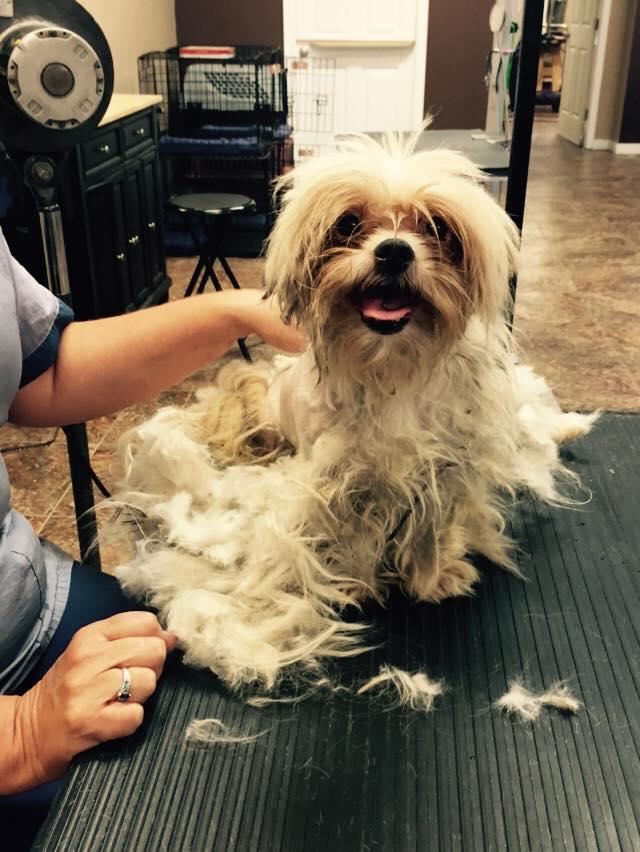 υιοθεσία σκύλου διάσωση αδέσποτων αδέσποτο Αδέσποτα