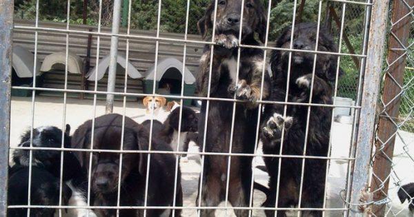 Τη θανάτωση των αδέσποτων σκύλων ζητά ο «πολιτισμένος» δήμαρχος Σερρών