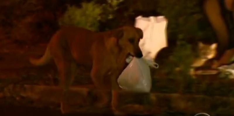 Σκύλος σκουπίδια