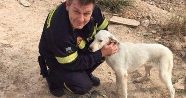 Έσωσαν το σκυλάκι που εντοπίστηκε εγκλωβισμένο σε φρεάτιο στον Ελαιώνα της Αθήνας