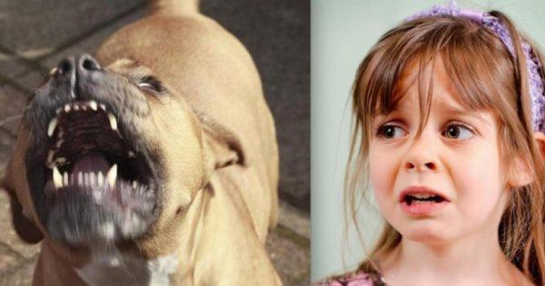 Φοβόταν τον σκύλο λόγω της ράτσας του. Μόλις δείτε όμως τι έκανε για την κόρη της θα μείνετε άφωνοι!