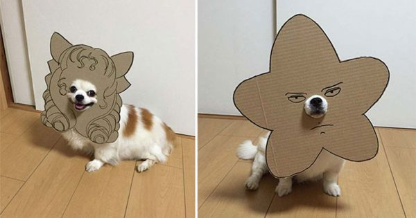 Ιαπωνέζα δημιουργεί ξεκαρδιστικά σχέδια από χαρτόνι για τον σκύλο της