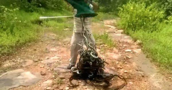 Έριξε 150 δηλητηριώδη φίδια μπροστά στα πόδια του – Δείτε τι έγινε μετά (βίντεο)