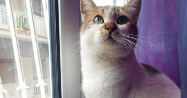 Χάθηκε στειρωμένος αρσενικός γάτος στην πλατεία Κολιάτσου στα Κάτω Πατήσια