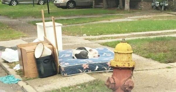 Σκύλος περιμένει έναν μήνα την οικογένεια του που μετακόμισε και τον εγκατέλειψε