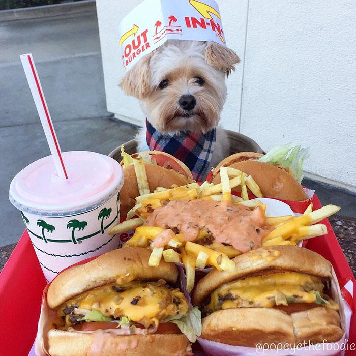 υιοθεσία σκύλων κακοποίηση σκύλων