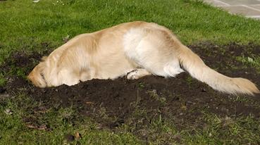 σκυλιά σκάψιμο