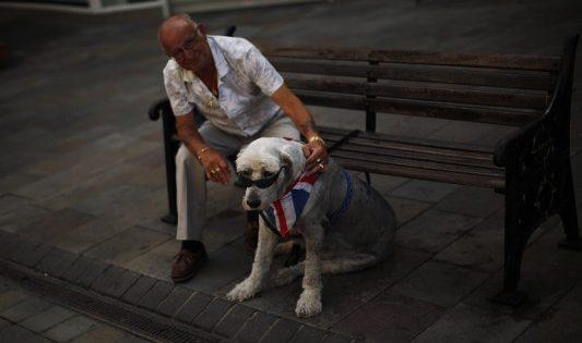 Η κοινωνικότητα του σκύλου ίσως προέρχεται από τα γονίδιά του!