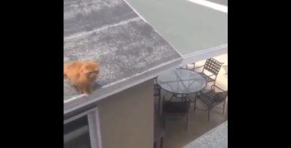 Το αποτυχημένο άλμα της γάτας