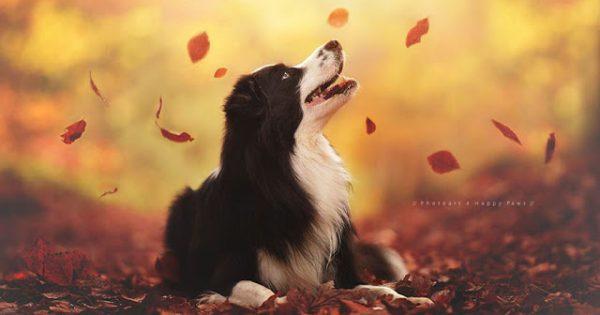 Φθινόπωρο και σκύλοι σε έναν φανταστικό συνδυασμό.