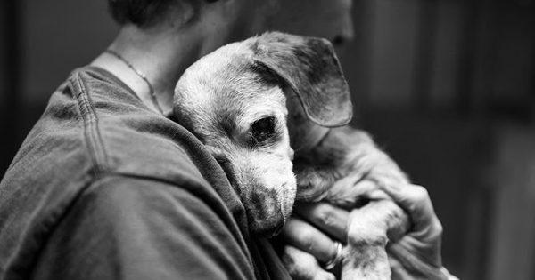 18 χρονών τυφλός σκύλος βρίσκει επιτέλους την αγάπη που αξίζει σε ένα καταφύγιο ζώων