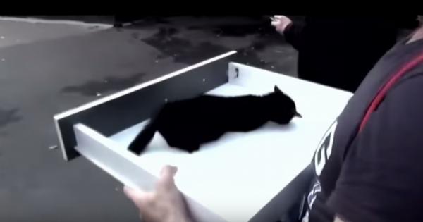 Γατάκι κλαίει από τον πόνο καθώς οι 2 άνδρες το μεταφέρουν σε ένα κουτί. Η συνέχεια έχει συγκλονίσει το διαδίκτυο!