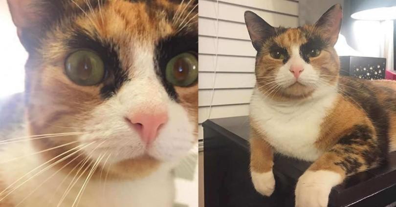 cat-810x424