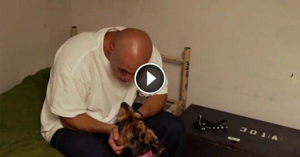 Έβαλαν έναν σκύλο στο κελί ενός φυλακισμένου και άρχισαν να βιντεοσκοπούν. Δείτε το βίντεο που έχει συγκλονίσει τον πλανήτη!