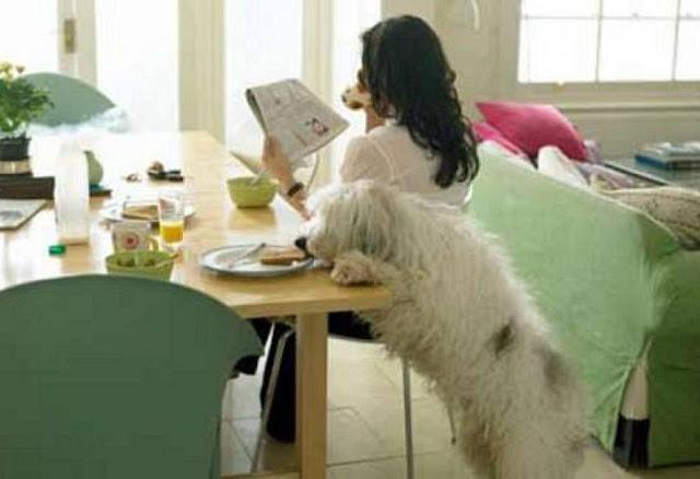 φαγητό Σκύλος