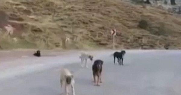 Η κοιλάδα των εγκαταλελειμμένων σκύλων της Τουρκίας