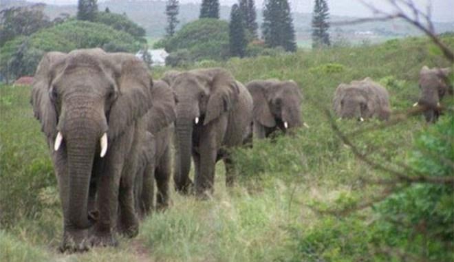 elefantes-perpatoysan-epi-12-wres
