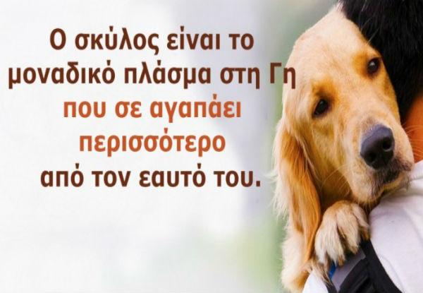 φωτογραφίες φιλόζωος σκυλιά