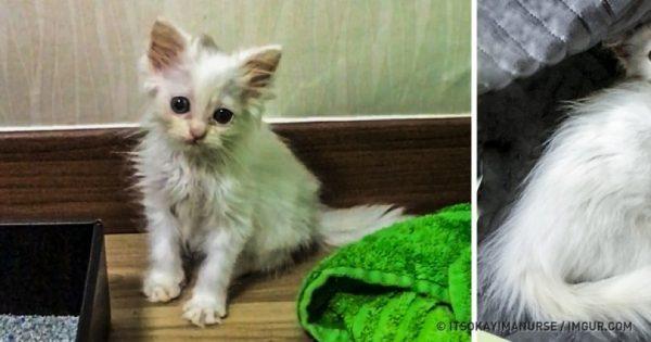 Όταν έσωσε αυτό το ετοιμοθάνατο γατάκι οι κτηνίατροι δεν του έδιναν καμία ελπίδα. Δείτε όμως πώς είναι σήμερα!