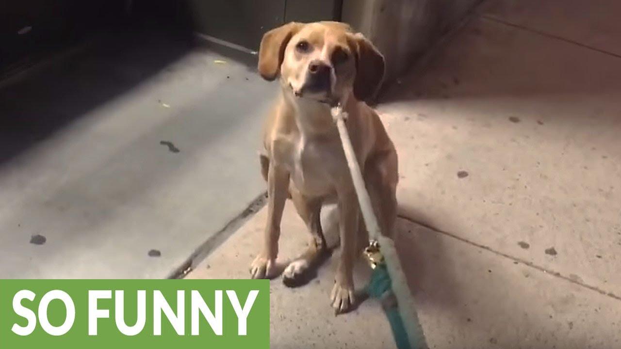 Σκύλος pet shop