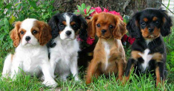 Είστε τύπος του καναπέ; Δες ποιες φυλές σκύλων σου ταιριάζουν! (φωτογραφίες)