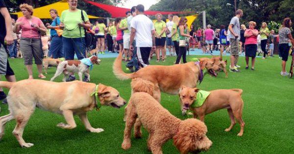 Είναι τα κοινόχρηστα πάρκα σκύλων ασφαλή για εμένα και τον σκύλο μου;