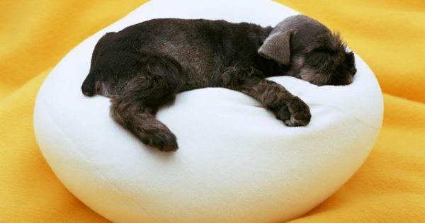 Όχι! Δεν είναι σίγουρο πως ο σκύλος σου σε ονειρεύεται…
