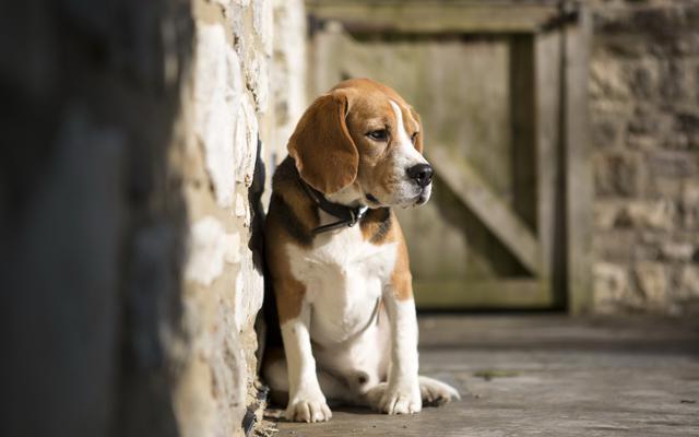 φόβος Σκύλος δάγκωμα