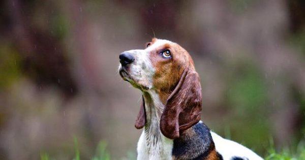 Μπορούν ο σκύλος και γάτα να προβλέψουν τον καιρό; Τι γίνεται με τα υπόλοιπα ζώα;