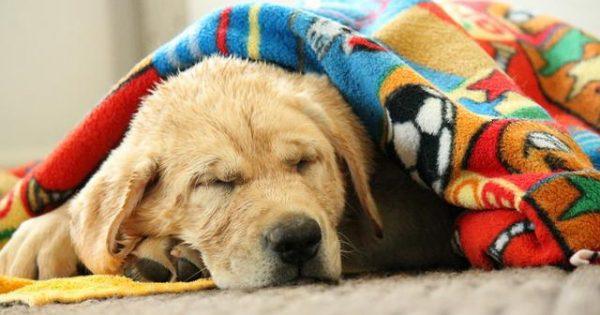 Πώς μπορώ να καταλάβω πως ο σκύλος μου κρυώνει; Τι μπορώ να κάνω για να τον βοηθήσω;