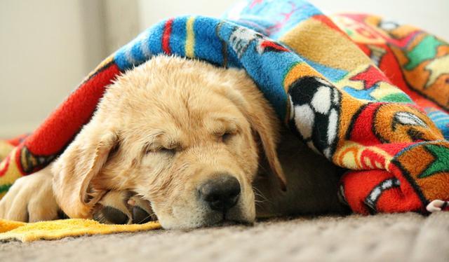 Σκύλος κρύο