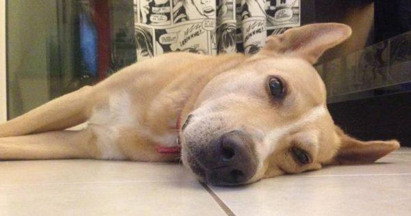Ο Ντόντυ πέθανε από εισπνεόμενη φόλα – Η συγκινητική ανάρτηση στο facebook