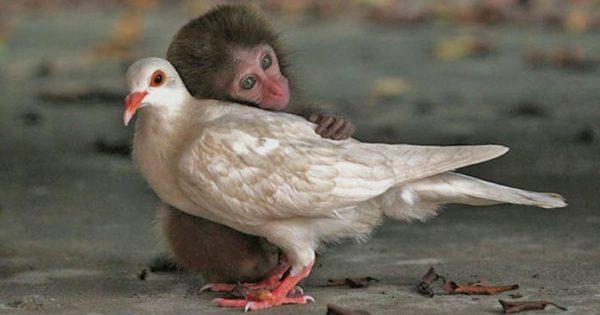 20 όμορφες φωτογραφίες με ζώα που γνωρίζουν καλά τι σημαίνει αγάπη