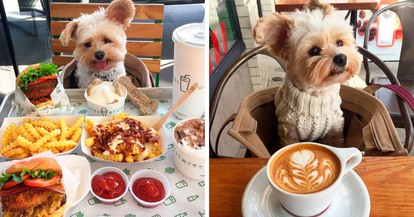 rescue-dog-restaurants-food-instagram-popeyethefoodie-fb2-810x425