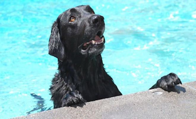 Σκύλος πισίνα μωρό γενναίος σκύλος