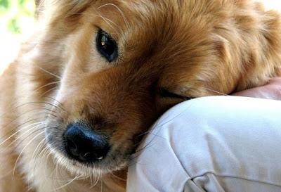 Tι θέλει να μας πει ο σκύλος μας όταν ακουμπά το κεφαλάκι του επάνω μας;