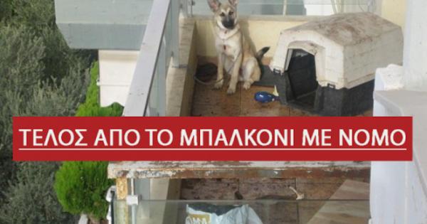 Σκυλιά στο μπαλκόνι ΤΕΛΟΣ– Τι λέει ο νόμος ποια είναι τα πρόστιμα