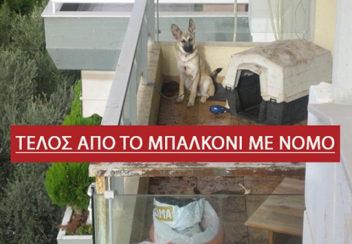 σκυλιά στο μπαλκόνι σκυλιά μπαλκόνι κατοικίδια