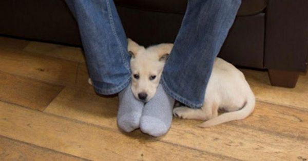 Μήπως ο σκύλος σας έρχεται και κάθεται συχνά ανάμεσα στα πόδια σας; Δείτε τι σημαίνει!