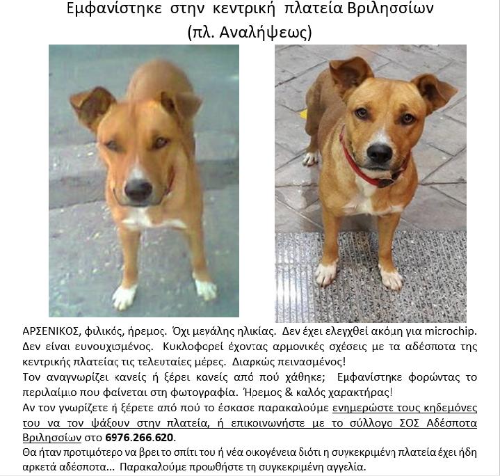 Βριλήσσια βρέθηκε σκύλος αγγελίες σκύλων