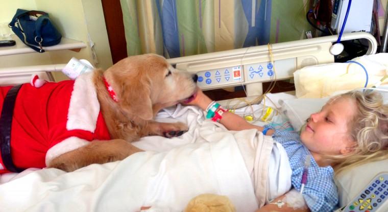 σκύλοι θεραπείας σκύλοι θεραπεία