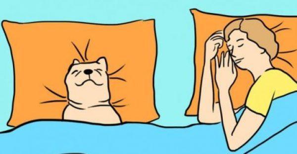7 λόγοι που ο σκύλος σας πρέπει να κοιμάται στο ίδιο κρεβάτι με εσάς