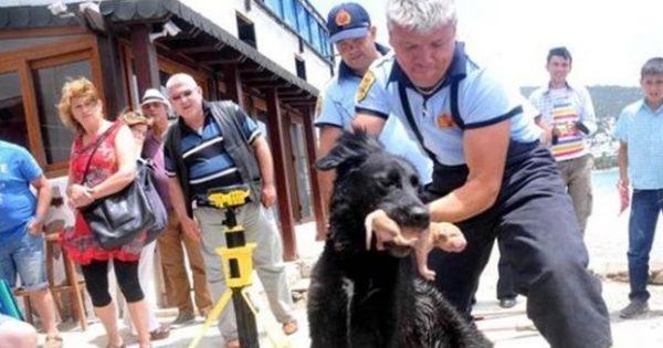 Μαμά εν δράσει: Ηρωική σκυλίτσα σώζει 8 κουτάβια της από βέβαιο θάνατο (φωτό)