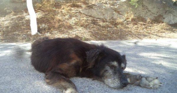 Ζευγάρι Βρετανών υιοθέτησε υπερήλικη αδέσποτη σκυλίτσα που ζούσε σε απομακρυσμένη περιοχή του Ηρακλείου Κρήτης